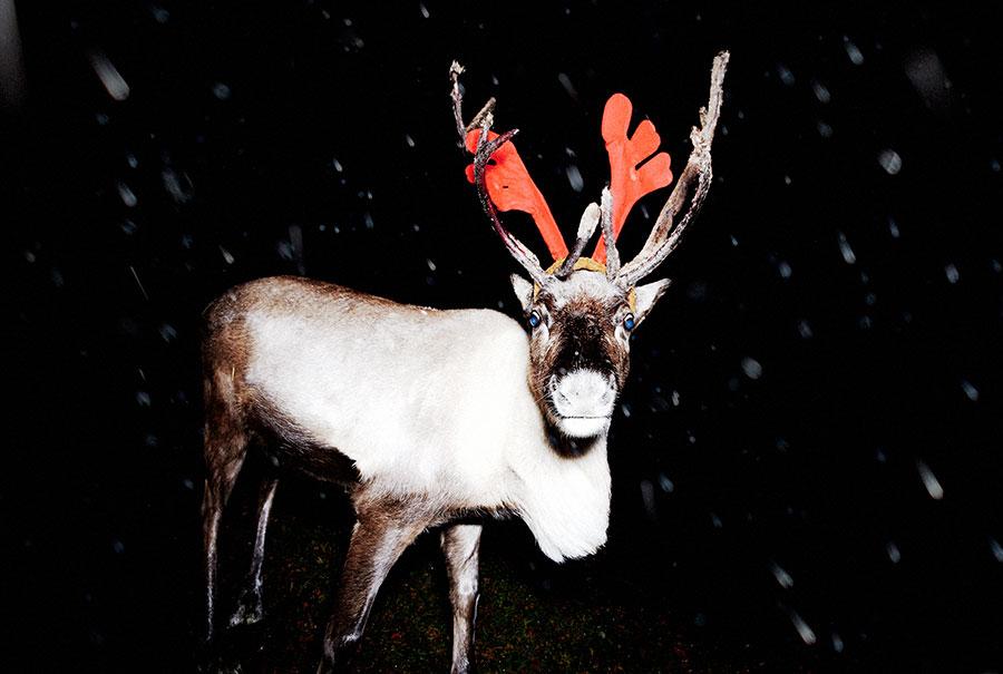 van-schelven-reindeer-01